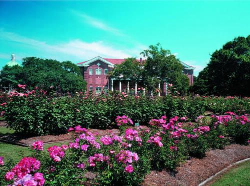 All American Rose Garden in Hattiesburg, MS