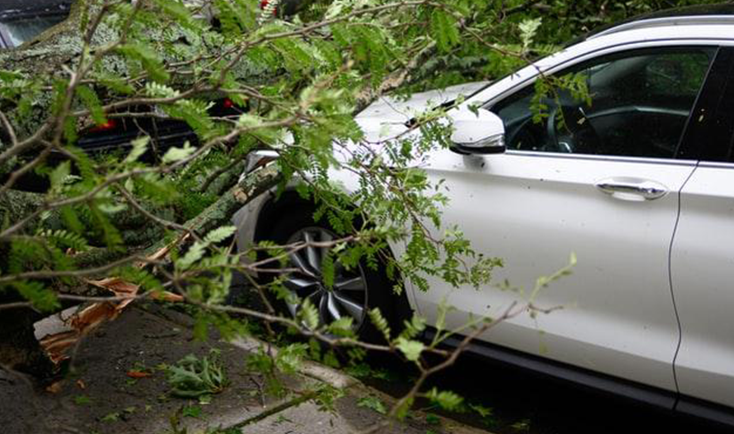 updated fallen tree on car